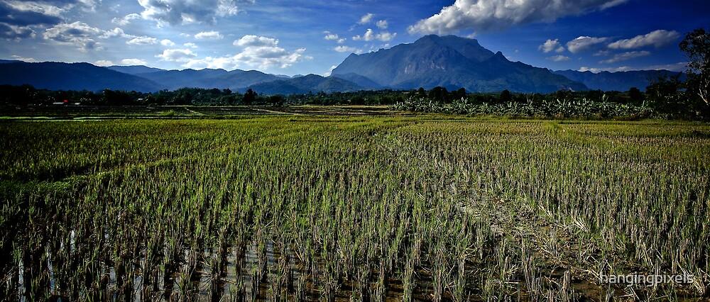 Chiang Mai | Chiang Dow | Thailand by hangingpixels