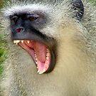 Monkey Business by Chris Coetzee