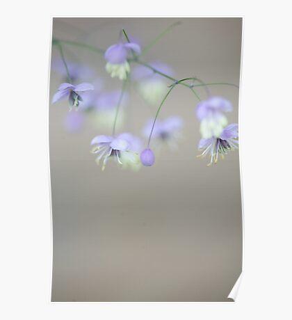 Lavender mist Poster