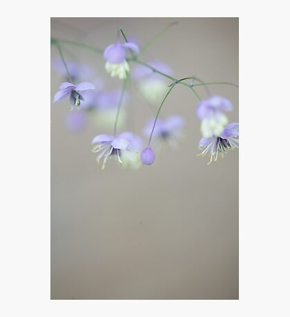 Lavender mist Photographic Print