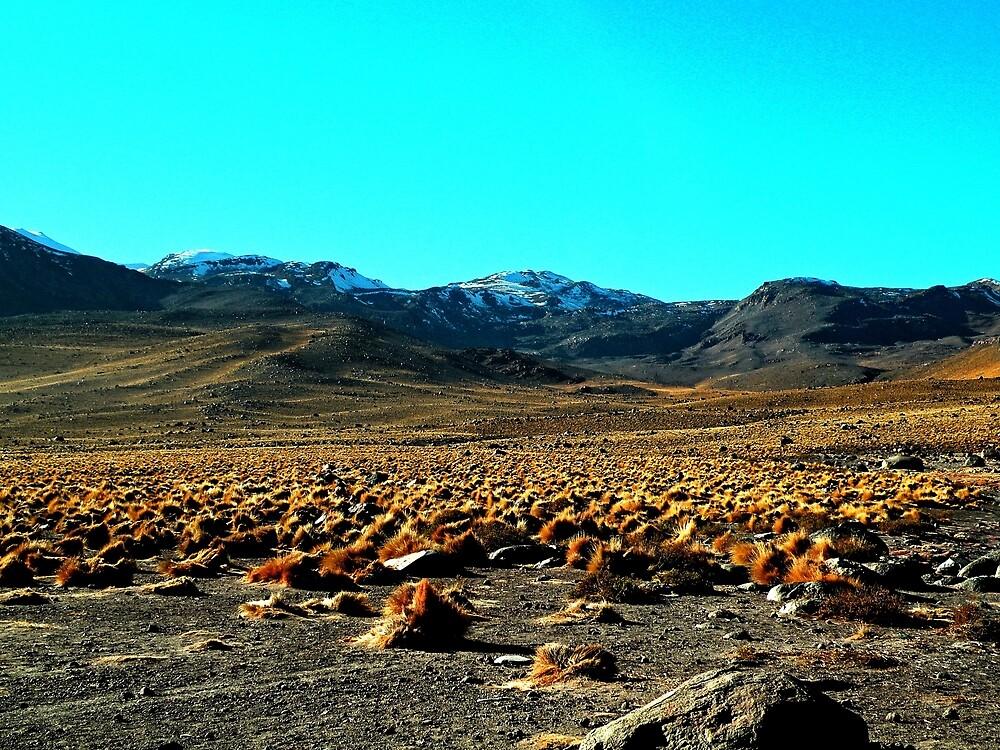 Bendito Desierto de Atacama, CHILE. by cieloverde