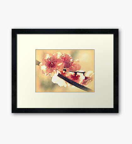 Spring of 2012 Framed Print