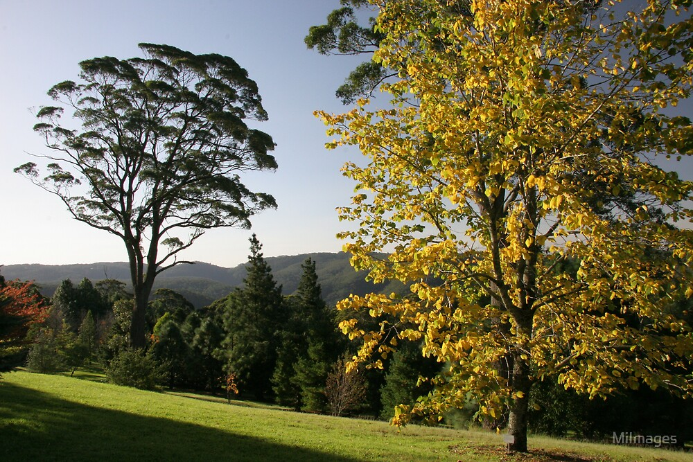 Autumn In Mt.Tomah NSW Australia by MiImages