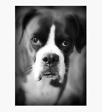 Arwen's Portrait - Female Boxer - Boxer Dogs Series Photographic Print