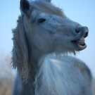 Pony Smile by SusannahFry