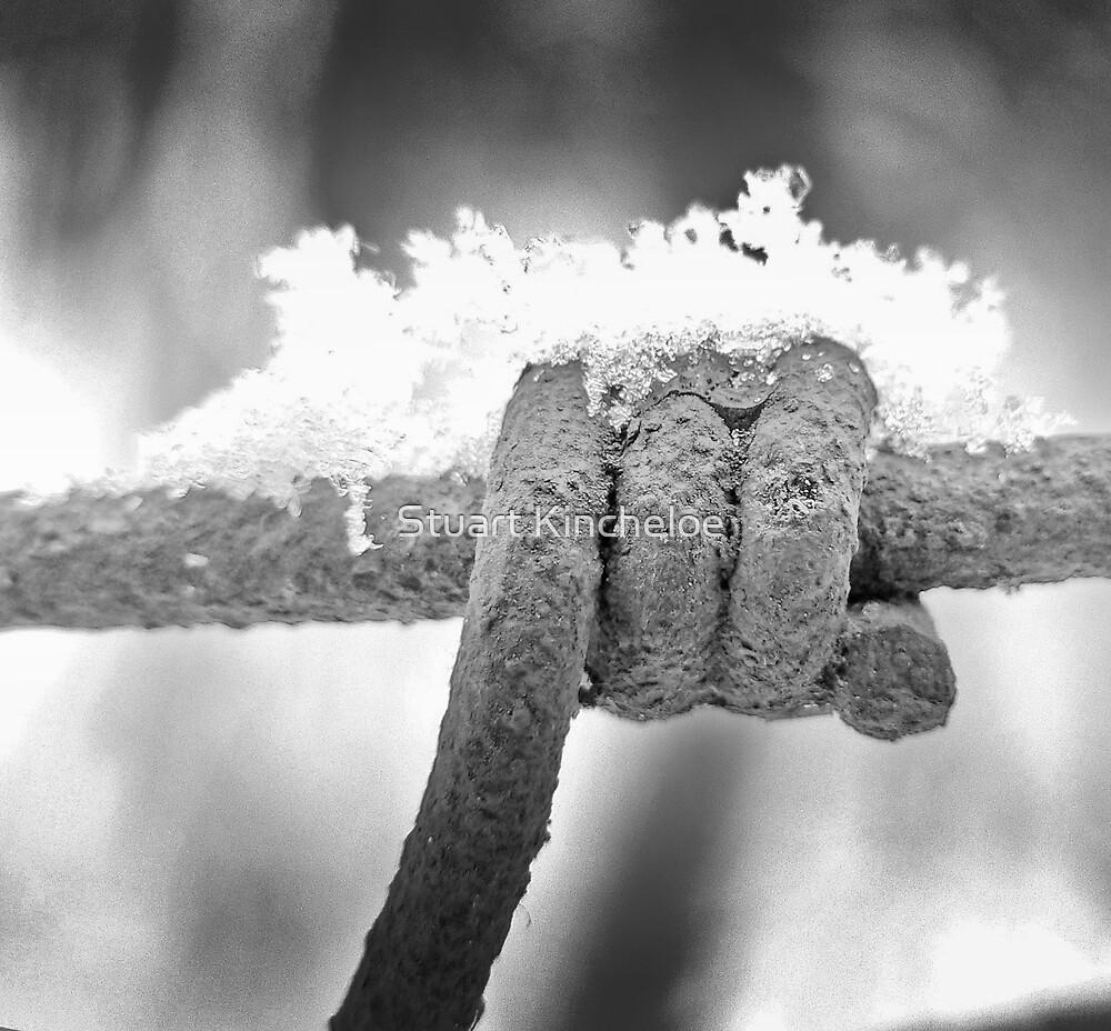 Snowy Barb by Stuart Kincheloe
