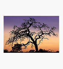 Vulture's Lair Photographic Print
