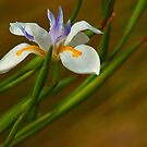 Bearded Iris And Wild Grass by Larry Costales
