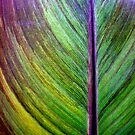 Leaf Texture Abstract by Larry Costales