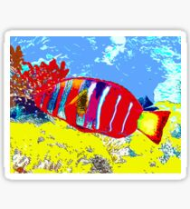 Reef Wrasse Sticker