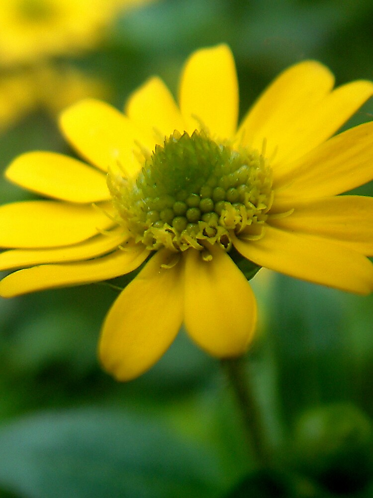Mellow yellow by Bev Evans