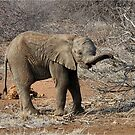 HUNGRY BABY - THE ELEPHANT - Loxodonta Africana by Magriet Meintjes
