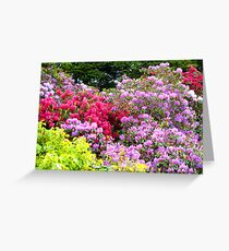 Reds and Pinks Greeting Card