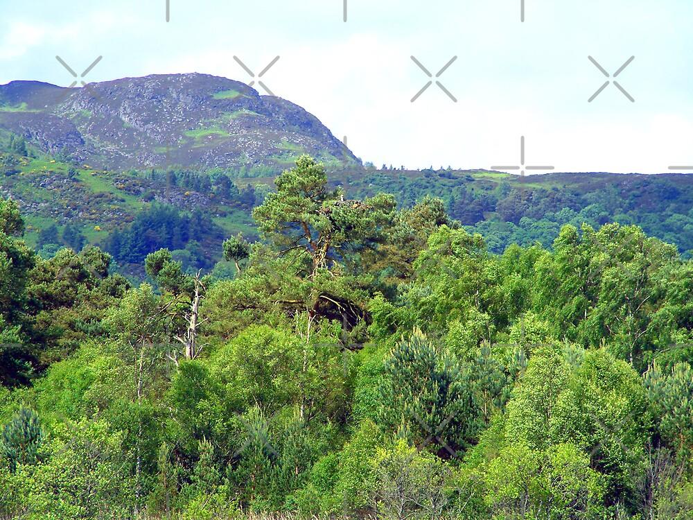 Scottish Highlands by Tom Gomez