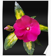 Pink Flower Yellow Leaves Poster