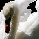 White Swan by Kate Purdy