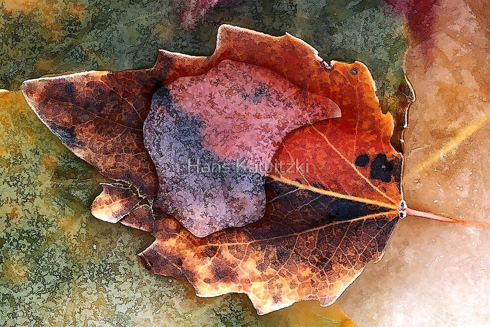 1534 Autumn Leaf in Ice by Hans Kawitzki