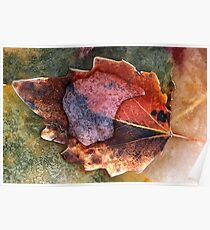 1534 Autumn Leaf in Ice Poster