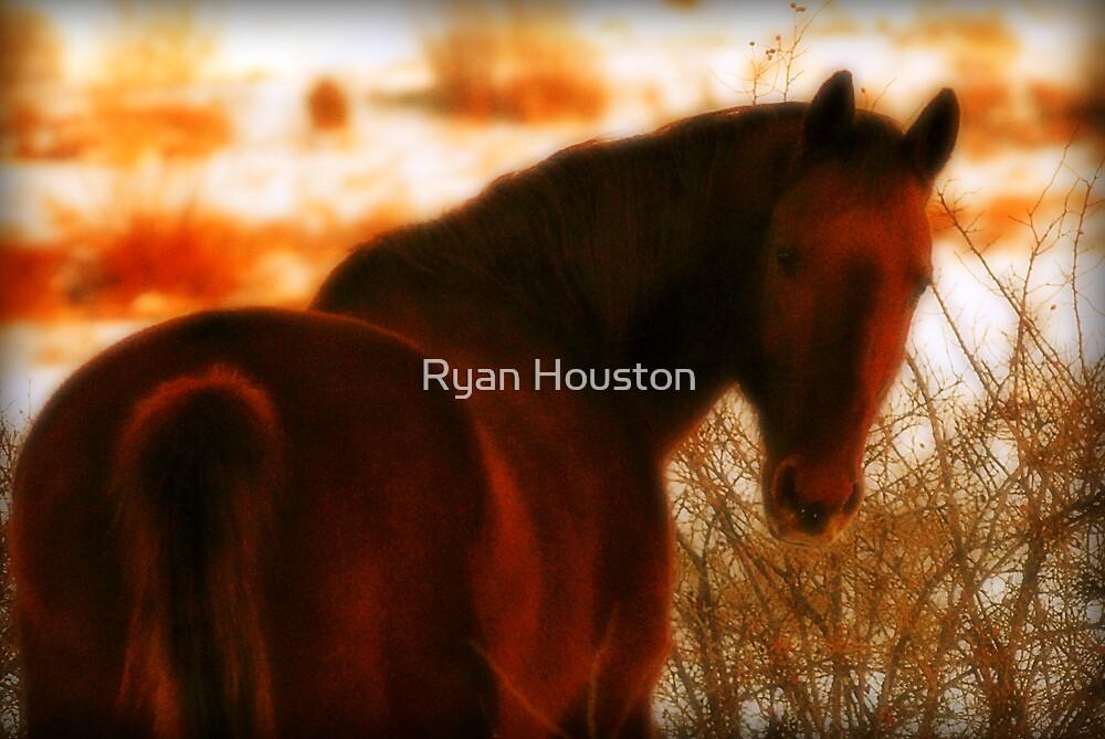Looking Toward a Setting Sun by Ryan Houston