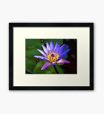 1462 Water Lily Framed Print