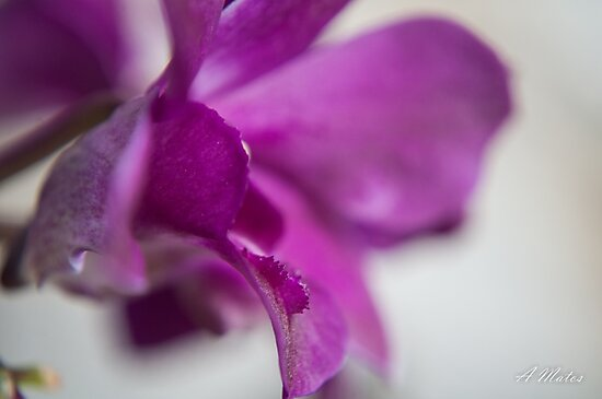 Orchid leave by Cropfactorgroup