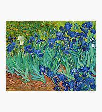 Irises by Vincent van Gogh (May 1889) Photographic Print