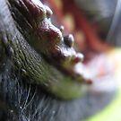 DOG TEETH LIPS by SofiaYoushi