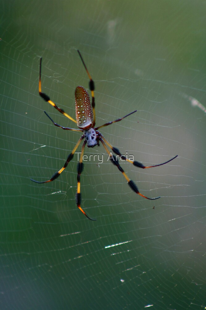 Spider II by Terry Arcia