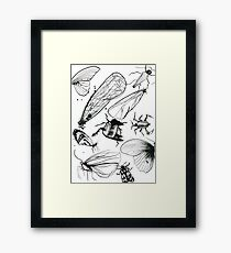 Insect page Framed Print