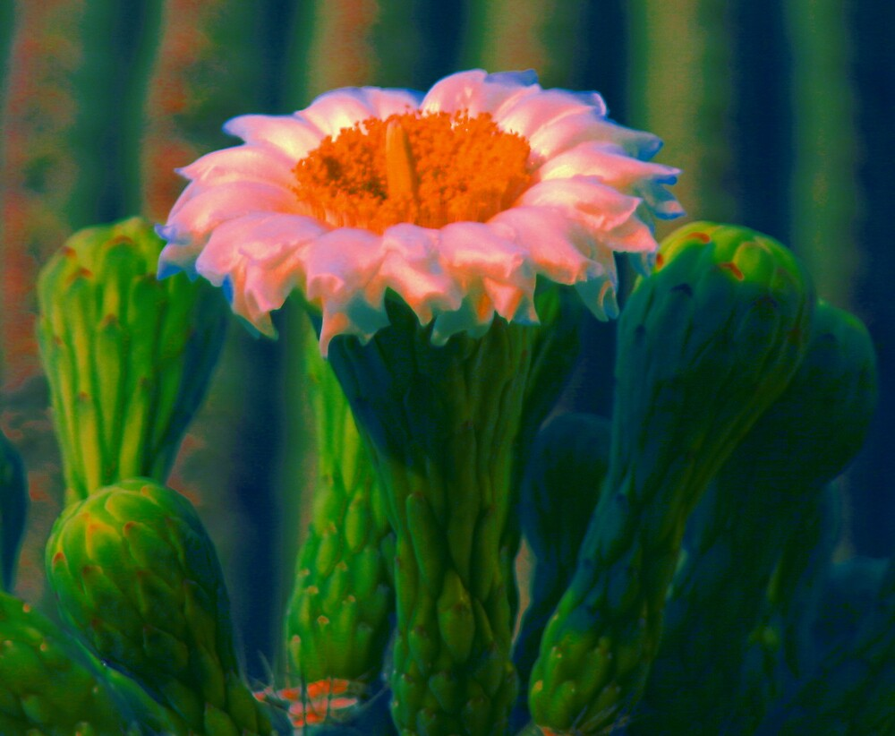 PINK FLOWER by mark anthony