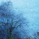 One Tree and Hoar Frost by Imi Koetz