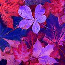 Colorful Leaves by Richard-Gary Butler