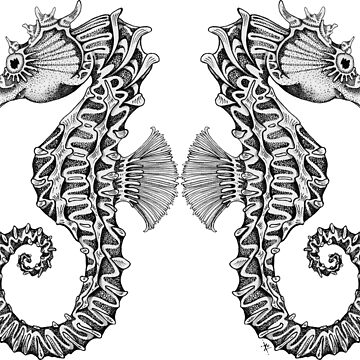 Seahorse Love by ZoJones