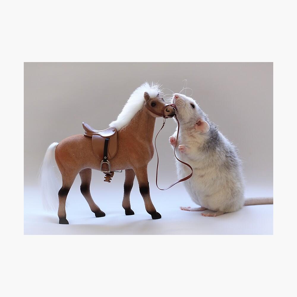 Ich liebe Pferde! Fotodruck