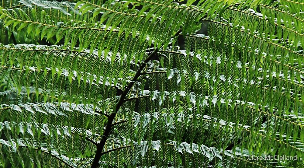 Green Rain by Clare McClelland