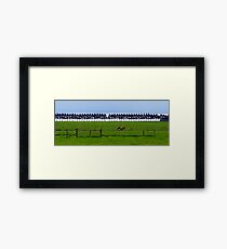 Cows - fences, trees and only 1 gate. Framed Print