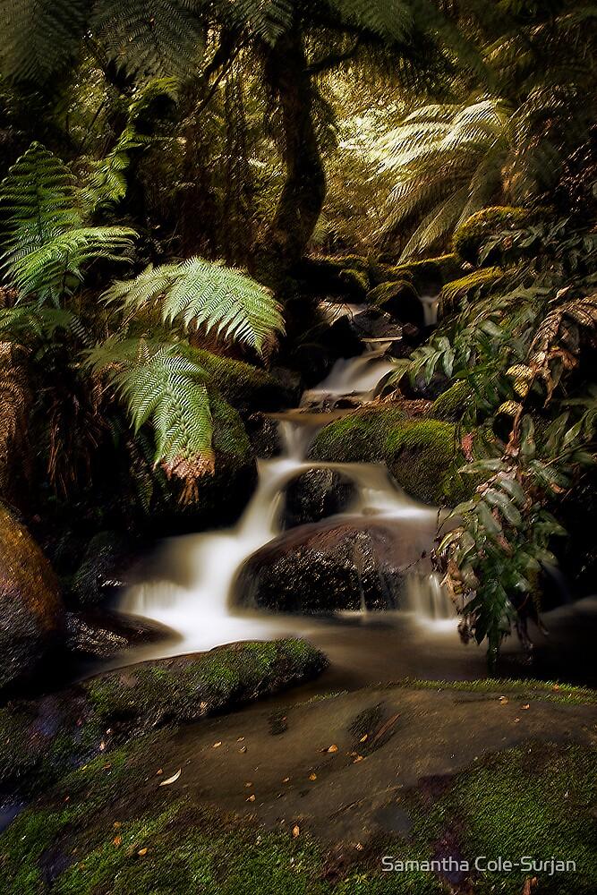 Cement Creek by Samantha Cole-Surjan