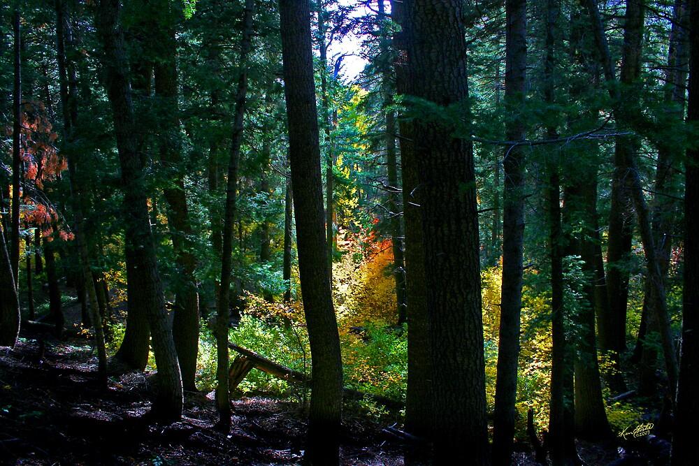 Autumn Meadow  by Ken Fortie