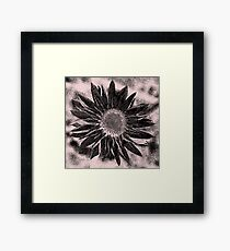 Paper Daisy in pencil Framed Print