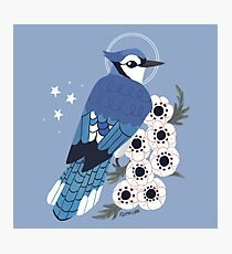 Familiar - Blue Jay Photographic Print