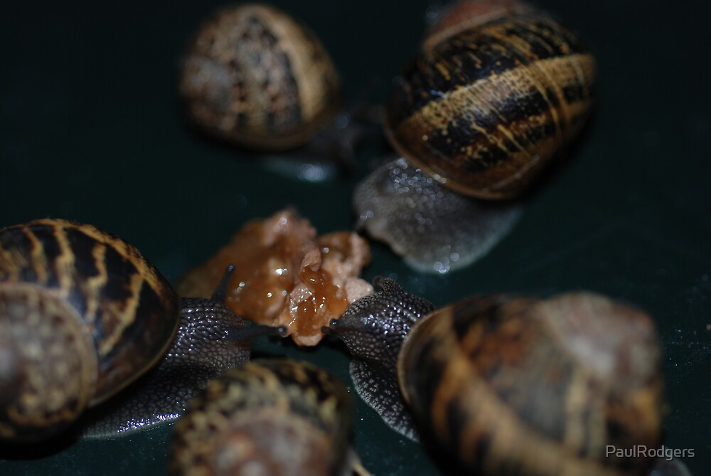Snails dinning out by PaulRodgers