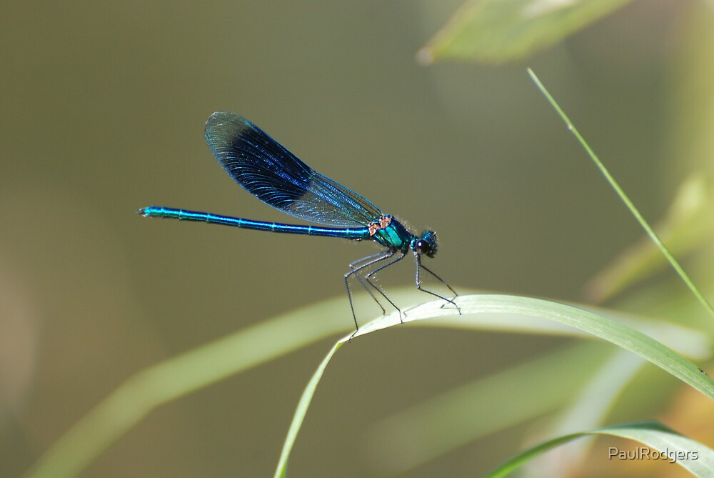 Dragon Fly by PaulRodgers