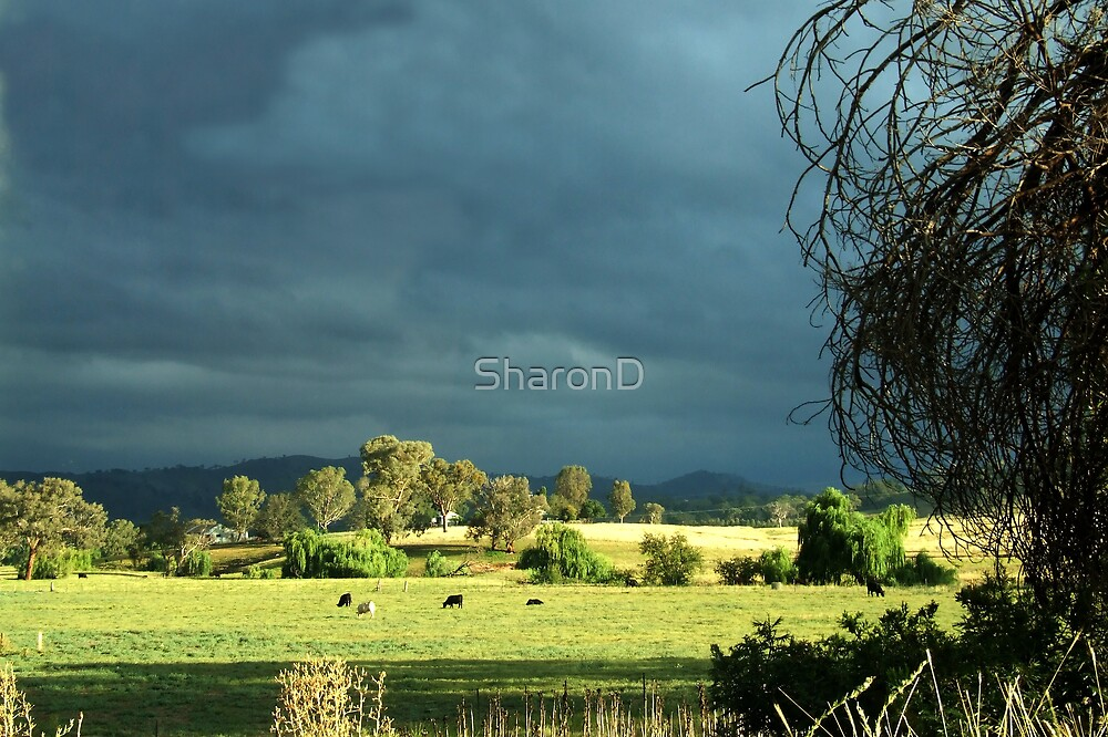 Across the field by SharonD