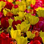I love tulips :-) by MarekM