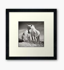 Horses of Luskentyre  Framed Print