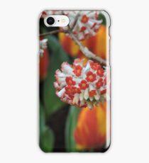 Edgeworthia Chrysantha Akebono (Paper Bush) iPhone Case/Skin