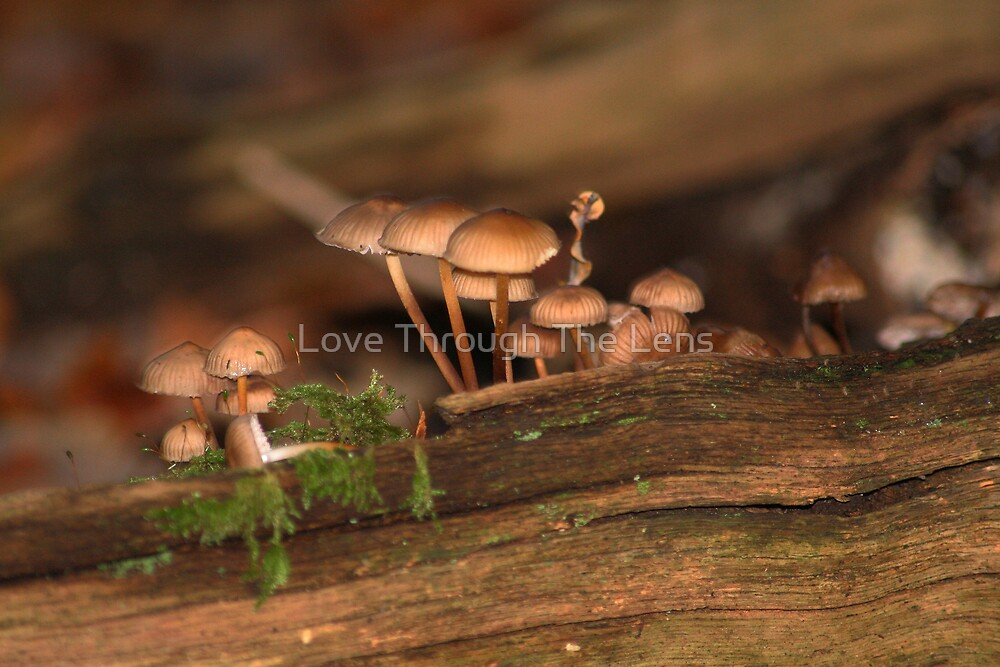 New Forest Fungi by Love Through The Lens