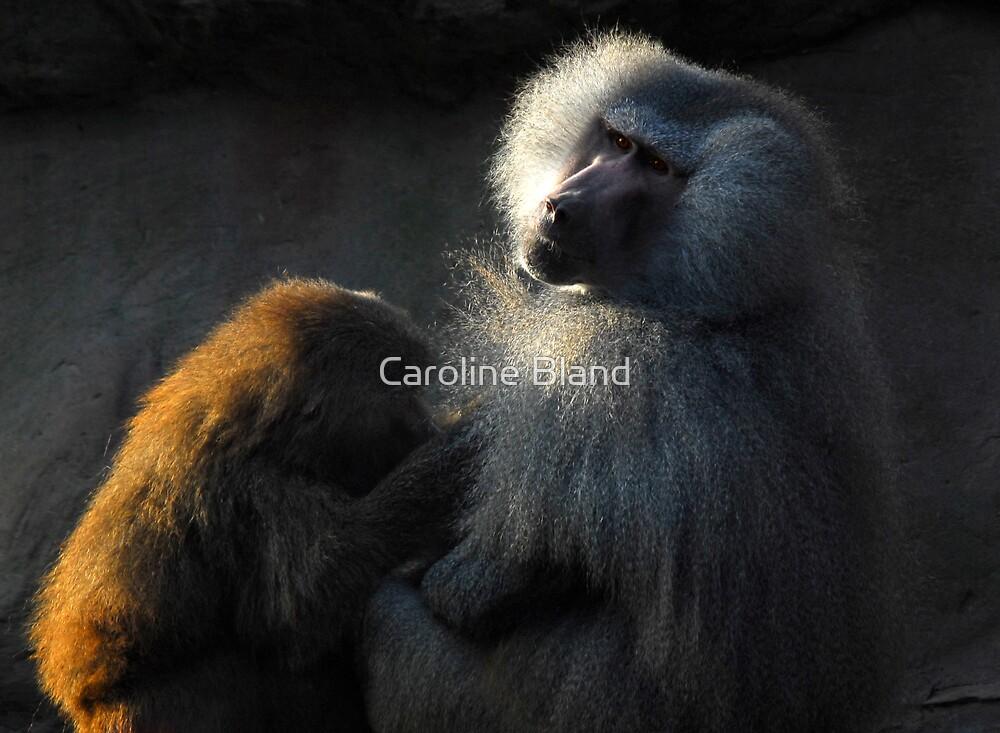 Grooming  by Caroline Bland