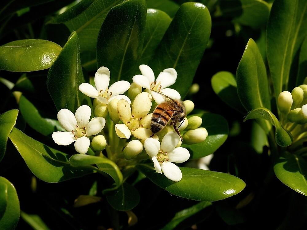 Honeybee at Her Springtime Work by Douglas E.  Welch