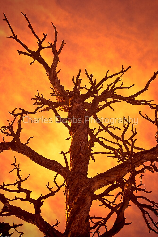 HELL by Charles Dobbs Photography